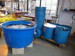 Small scale aquaculture guide backyard fish farming